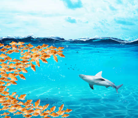 Photo pour Goldfishes group make a big mouth to eat the shark. Concept of unity is strenght,teamwork and partnership - image libre de droit