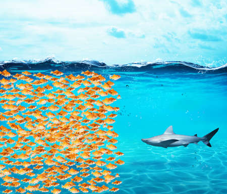 Photo pour Goldfishes group make a wall against the shark. Concept of unity is strenght, teamwork and partnership - image libre de droit
