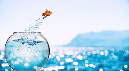 Photo pour Goldfish leaps out of the aquarium to throw itself into the sea - image libre de droit