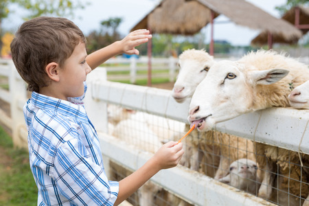 Foto de Happy little boy feeding sheep in a park at the day time. Kid having fun otdoors. Concept of good leisure. - Imagen libre de derechos
