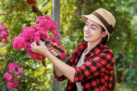 gardener trimming rose bush