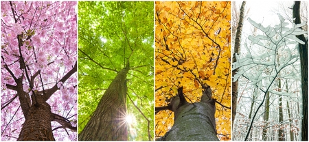 Foto de four seasons in the treetops - Imagen libre de derechos