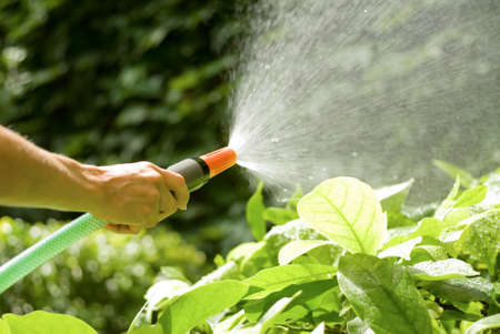 female hand watering the plants with a sprayng hosepipe