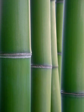 close up of green bamboo reeds