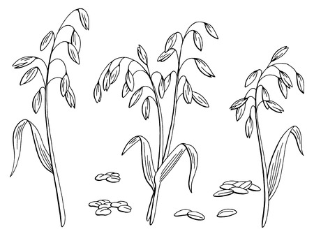 Illustration pour Oat plant graphic black and white isolated sketch illustration vector - image libre de droit
