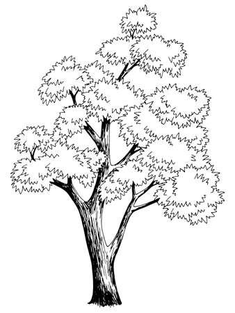 Illustration pour Maple tree graphic black white isolated sketch illustration vector - image libre de droit