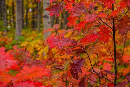 Fall foliage displays vivid colors in a forest in autumn.