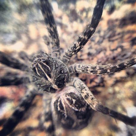 Spider in Algonquin.