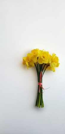 Photo for bouqut of yellow daffodil on white background. - Royalty Free Image