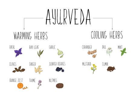 Vektor für Hand-sketched collection of elements of Ayurvedic spices in our kitchen. - Lizenzfreies Bild