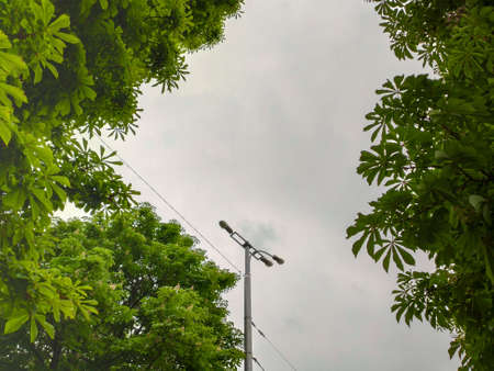 Photo for street light with green tree in the city on the clouds background - Royalty Free Image
