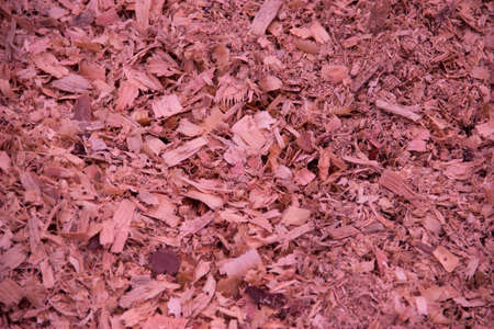 Background of natural wood shavings (sawdust texture).
