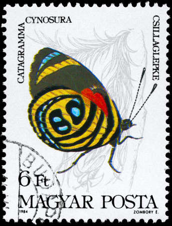 HUNGARY - CIRCA 1984: A Stamp printed in HUNGARY shows image of a Butterfly with the description Catagramma cynosura, series, circa 1984
