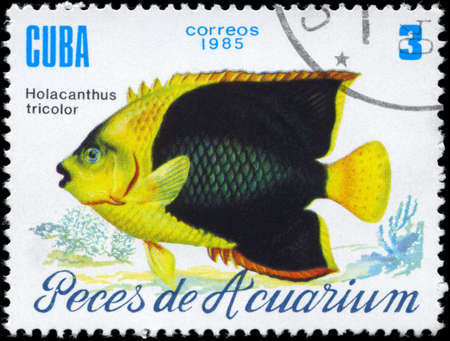 CUBA - CIRCA 1985: A Stamp printed in CUBA shows image of a Holacanthus tricolor from the series Aquarium Fish, circa 1985
