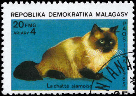MALAGASY REPUBLIC - CIRCA 1985: A Stamp printed in MALAGASY REPUBLIC shows image of a Siamese Cat from the series Cats and Dogs, circa 1985