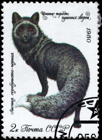 USSR - CIRCA 1980: A Stamp printed in USSR shows image of a Dark Silver Fox from the series Fur-bearing Animals, circa 1980