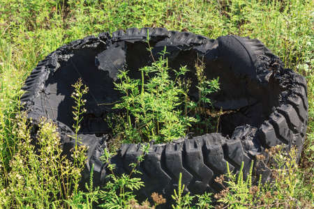 Abandoned old tires on the grass