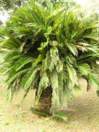 spiny trees