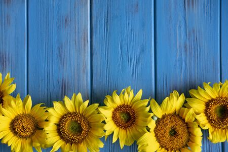Foto de Autumn banner with flowers of sunflower on a blue wooden background. Frame for greeting card with flowers of sunflower. - Imagen libre de derechos