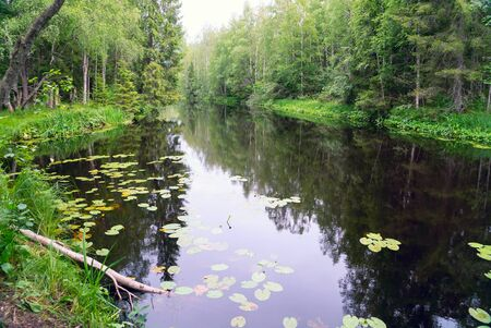 Photo pour Water lilies in the Tohmajoki river . Karelia. - image libre de droit