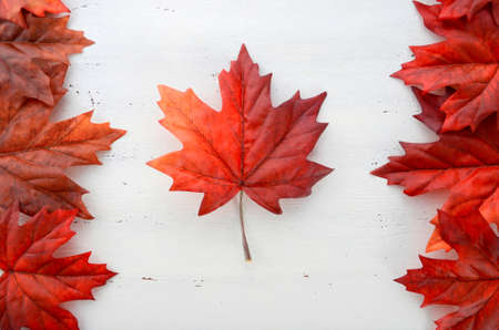 Photo pour Happy Canada Day red silk leaves in shape of Canadian Flag on white shabby chic wood table. - image libre de droit