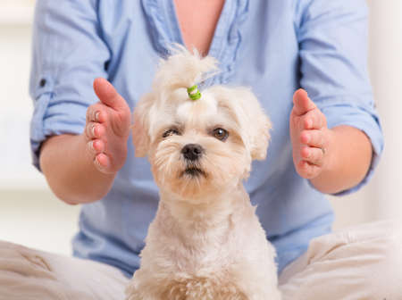 Woman doing Reiki therapy for a dog, a kind of energy medicine
