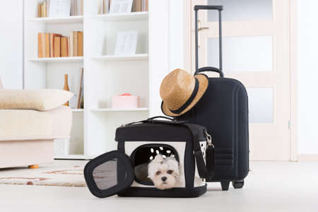 Photo for Small dog maltese sitting in his transporter or bag and waiting for a trip - Royalty Free Image
