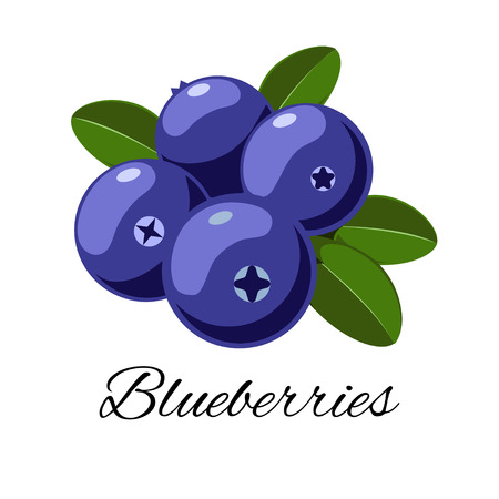 Illustration pour Vector cartoon blueberries with leaves. Isolated on white background. Icon for your design. for pattern, badge, label, textile etc - image libre de droit