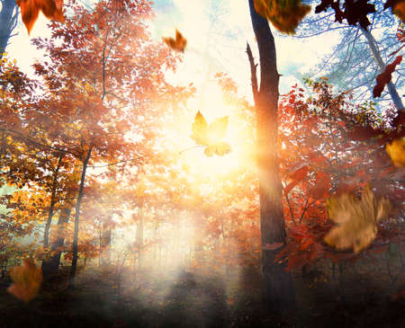 Misty and autumn morning in the forest
