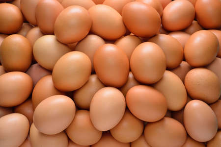 Group of eggs