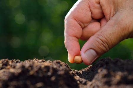 Photo pour Farmer's hand planting a seed in soil - image libre de droit