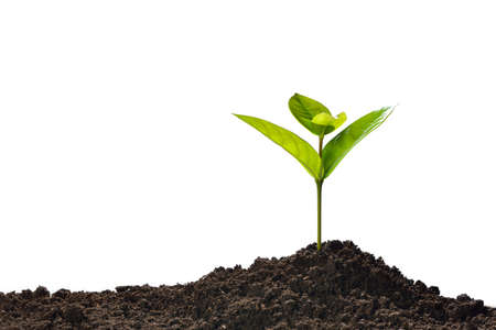 Photo pour Green sprout growing out from soil isolated on white background - image libre de droit