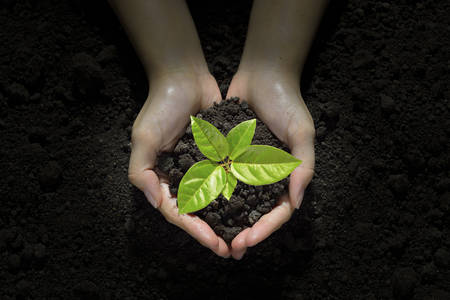 Photo pour Hands holding and caring a green young  plant - image libre de droit
