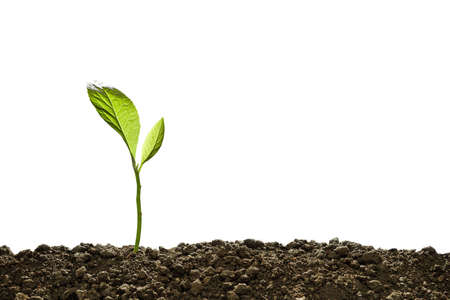 Photo pour Green sprout growing out from soil isolated on white - image libre de droit