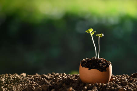 Photo pour Green sprout growing out from soil in eggshells on nature - image libre de droit