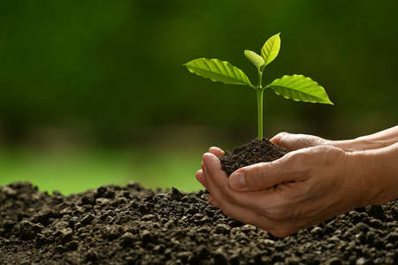 Photo pour Hands holding and caring a green young plant on nature background - image libre de droit