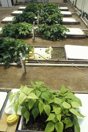 Hydroponic farming at the University of Arizona Environmental Research Laboratory in Tucson, AZ