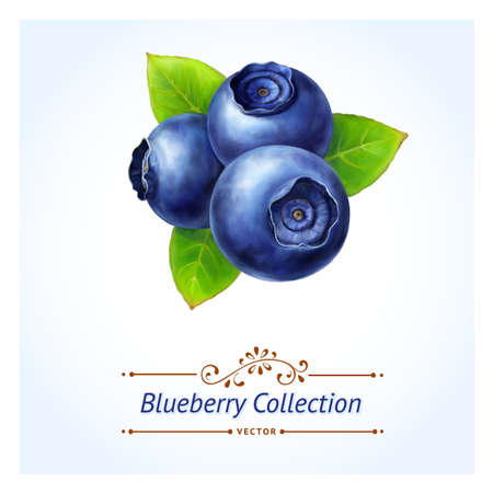 Illustration pour Blueberry, leaves and berries isolated on white background  Realistic digital paint  Vector illustration  - image libre de droit