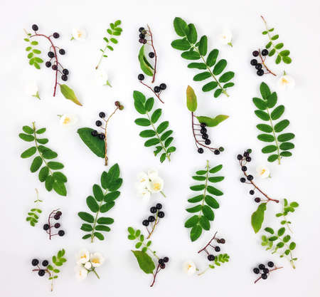 Colorful bright pattern of green leaves, black berries and flowers on white background. Flat lay, top view, view from above