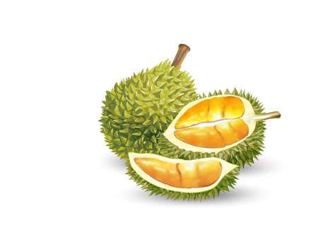 Illustration pour Durian. Set of realistic fruit, whole and sliced peeled - image libre de droit
