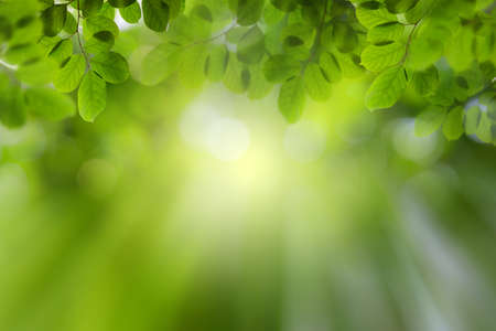 Photo pour Natural green leaves on bokeh with sun light and blurred greenery background in garden with copy space. Safe world and ecology concept. - image libre de droit