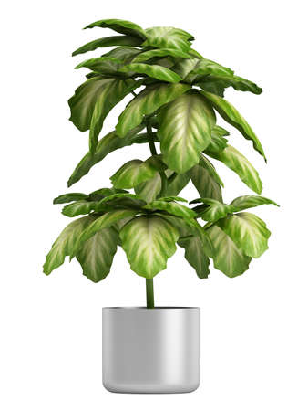 Fresh branchy home plant in a pot isolated on white background