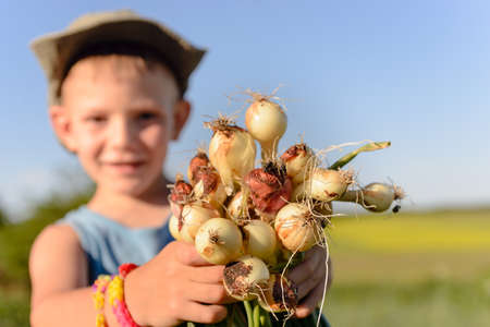 Little boy displaying a bunch of fresh onions in his hands with a smile that he has just harvested on the farm