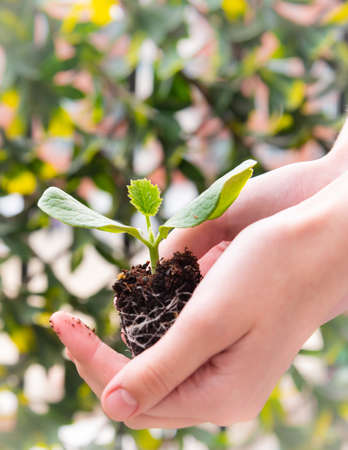 Photo for Close-up of woman's hands gently holding seedling plant - Royalty Free Image