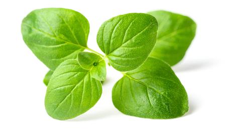 Photo for fresh oregano leaves isolated on white - Royalty Free Image