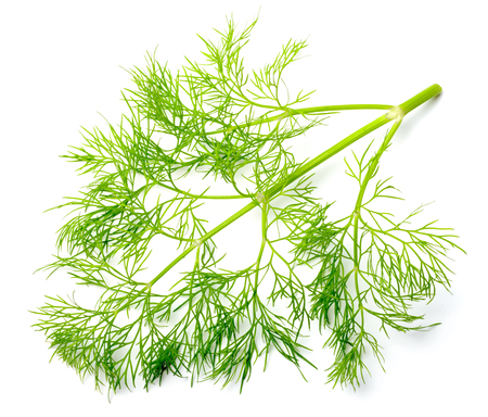 fresh dill weed isolated on white