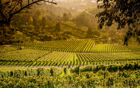 View down the idyllic vineyards and fruit orchards of Stuttgart Rotenberg (Germany)