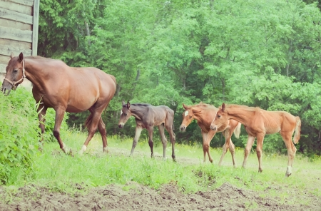 Three Little Foals And Their Mom