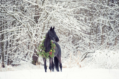 Photo pour black horse with christmas wreath. winter - image libre de droit
