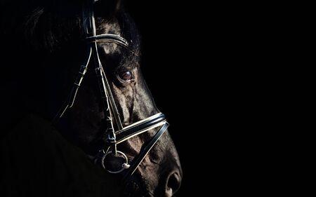Photo pour portrait of Beautiful black stallion at black background. close  up - image libre de droit